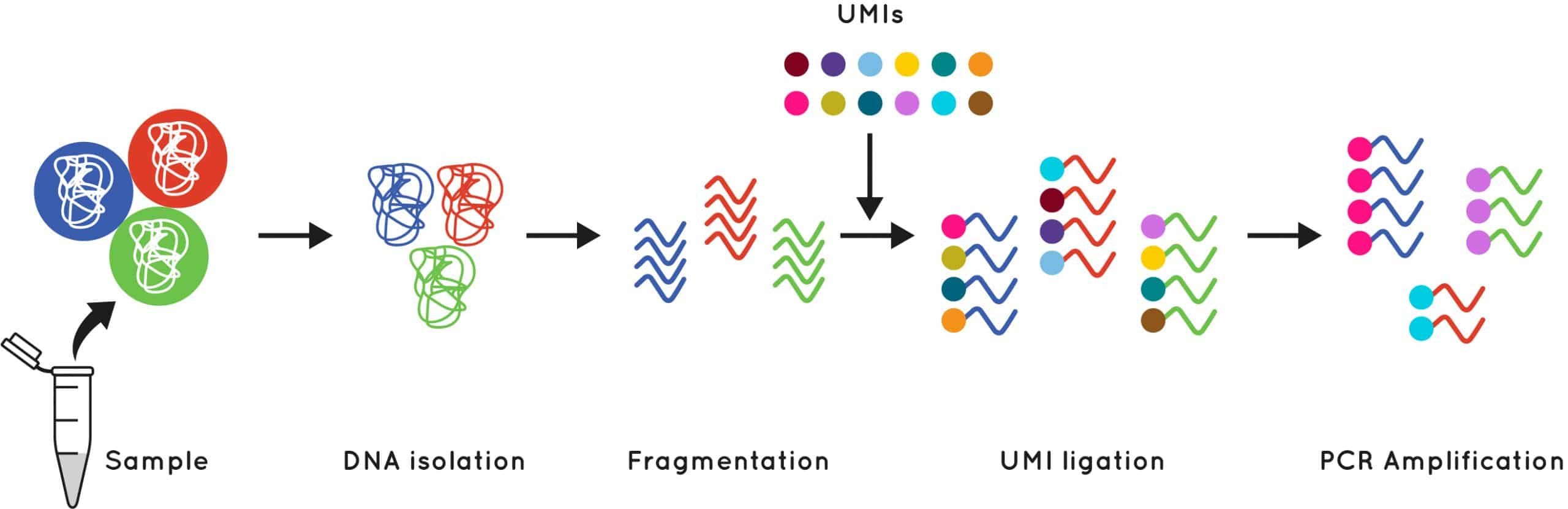 How unique molecular identifiers work