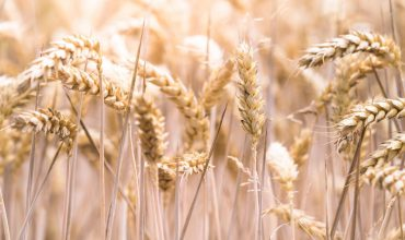 A less invasive, more comprehensive test for diagnosis of Coeliac Disease
